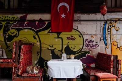 Istanbul-downtown-cat